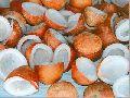 Coconut Copra