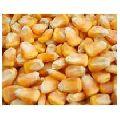 Maize Gram
