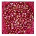Red Onion-01