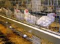 Poultry Cage Wire Mesh