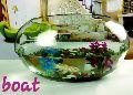 Boat Glass Bowls
