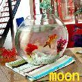 Moon Glass Bowls