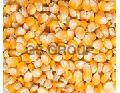 Yellow Maize / White Maize
