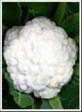 Hybrid Cauliflower Seed