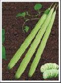 Hybrid Long Melon seed
