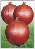 Hybrid Onion Seed
