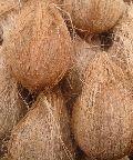 semi husked pollachi coconuts