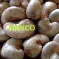 Raw cashew nuts in shell