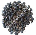 Jatropha Seeds