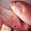 Rani Fish