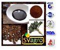 Chiroy Extract Powder