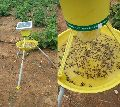 Solar Insects Light Trap