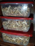 Dry Oyster Mushroom