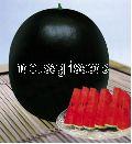 Indo Us Round Baby Watermelon F1 Hybrid Seeds