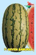 F1 Seven Samurai Watermelon