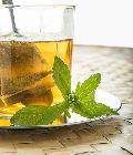 Stevia Herbaceous Plant