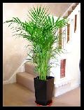 Indoor Plants On Rent Services