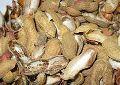 Groundnut Husk Briquettes