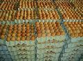 Brown Chicken Table Eggs