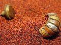 Ragi Millet Seeds