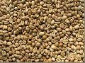 Raw Robusta Coffee Beans